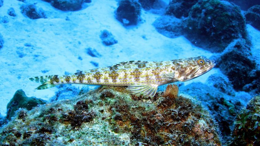 Bonaire diverse Tauchplätze, Bonaire diverse Tauchplätze,Bonaire,Niederländische Antillen