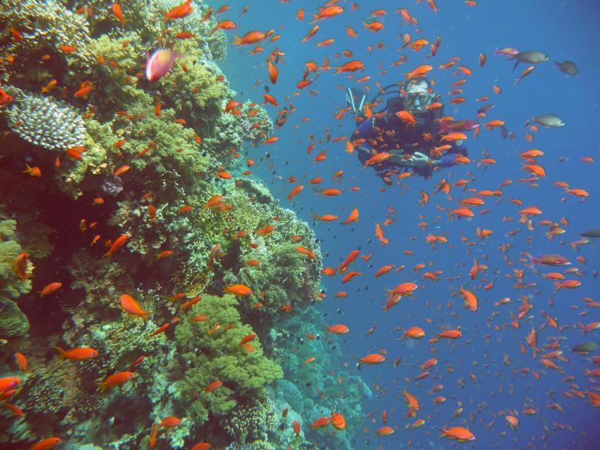 Ras Mohammed, Sharm El Sheikh und Tiran