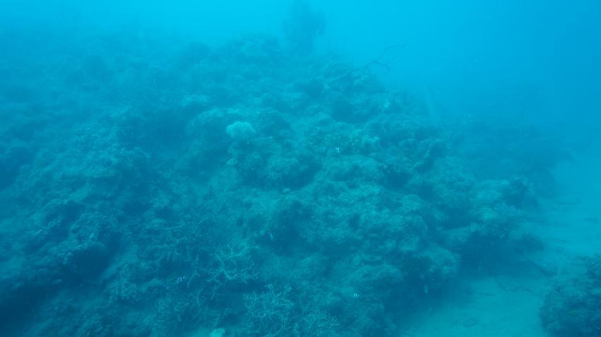 Hausriff, Dolphin Bay Divers, Vanua Levu, Fidschi