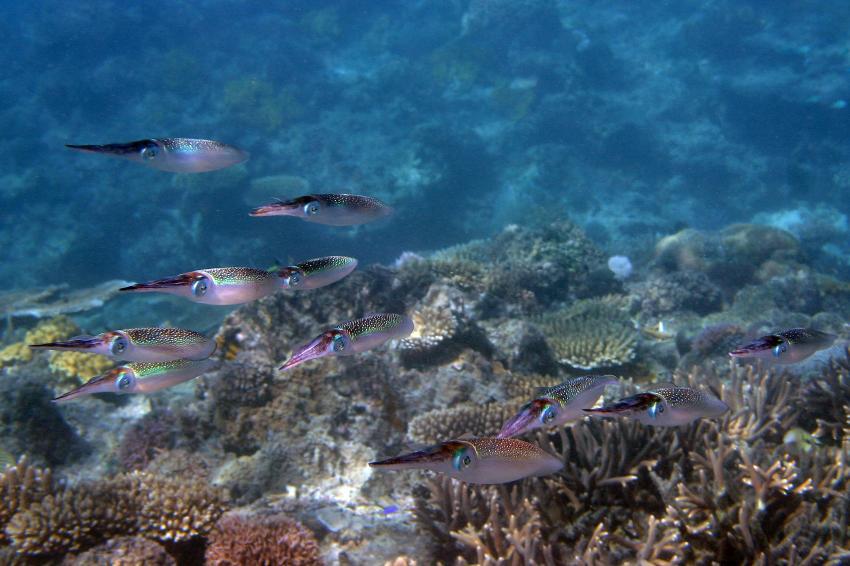 Mamanucas/Modriki, Mamanucas/Modriki,Fidschi,Sepien,Sepia