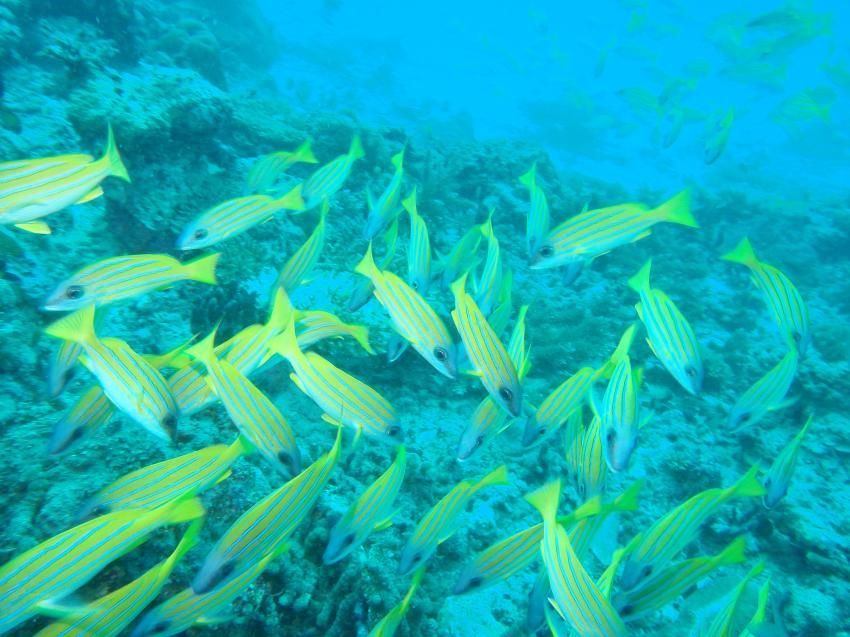 Helengeli, Helengeli,Malediven