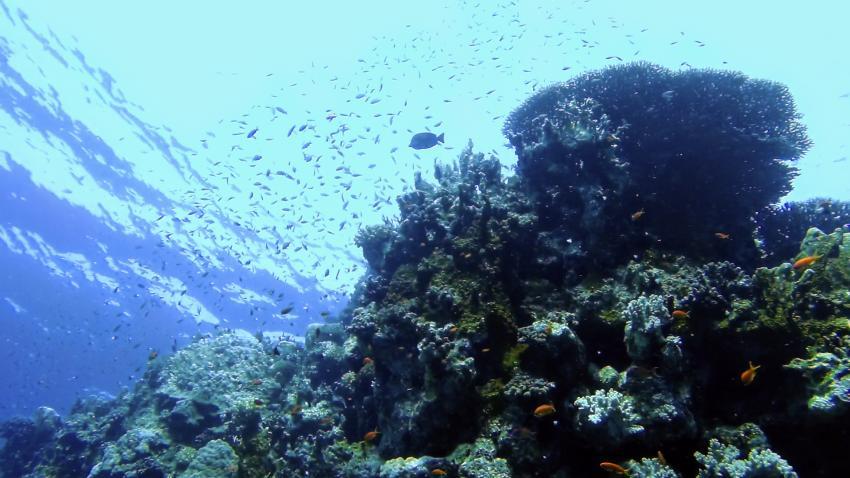 Riff Abu Dabab 3, Extra Divers - Equinox, Marsa Alam, Ägypten, Marsa Alam und südlich