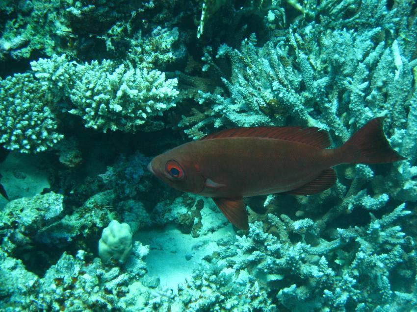 Hurghada - Shaab Sabrina, Shaab Sabrina,Ägypten