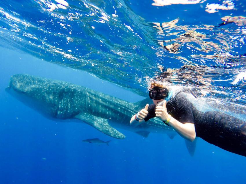 Walhai Schnorcheln, Schnorcheln mit Walhaien, Blue Motion Diver, Playa del Carmen, Mexiko