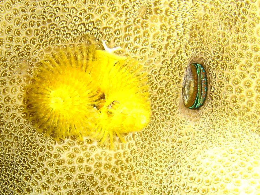El Quseir Pensee R. Garden, Hausriff Pensee Azur,Ägypten
