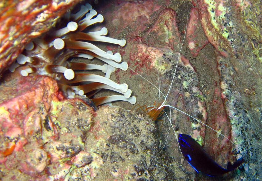 Playa Paraiso Teneriffa Barakuda Club, Playa Paraiso,Teneriffa,Spanien