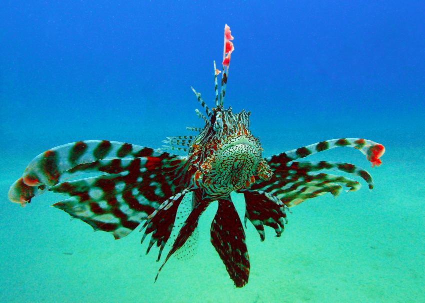 Hausriff Sharm El Arab - Makadi Bay - Extra Diver, Hausriff Sharm El Arab - Makadi Bay - Extra Diver,Ägypten