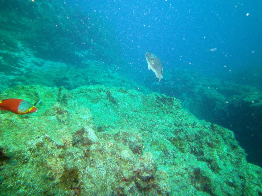 LA Palma Diving Center Hausriff, La Palma,Hausriff La Palma Diving Cente,Spanien