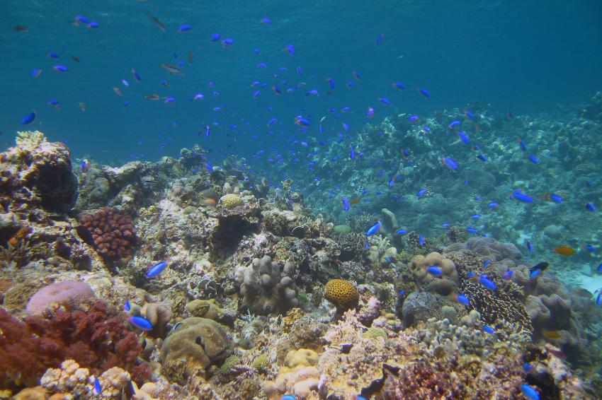 Pulau Satonda, Pulau Satonda,Indonesien