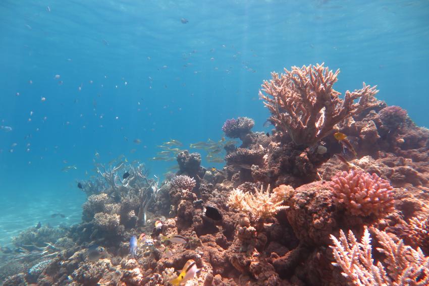 Scuba World Divers_Makadi Bay_Hausriff_3, Tauchen in der Makadi Bay, Scuba World Divers Makadi Bay, Ägypten, Hurghada