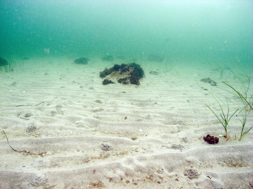 Tauchtag im November, Lübecker Bucht,Schleswig-Holstein,Deutschland,Schleswig Holstein