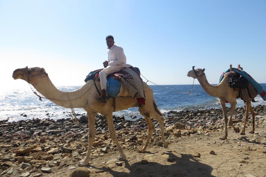Kamel-Safari. Camel Safari, Dive Urge Dive Resort, Dahab, Ägypten, Sinai-Nord ab Dahab