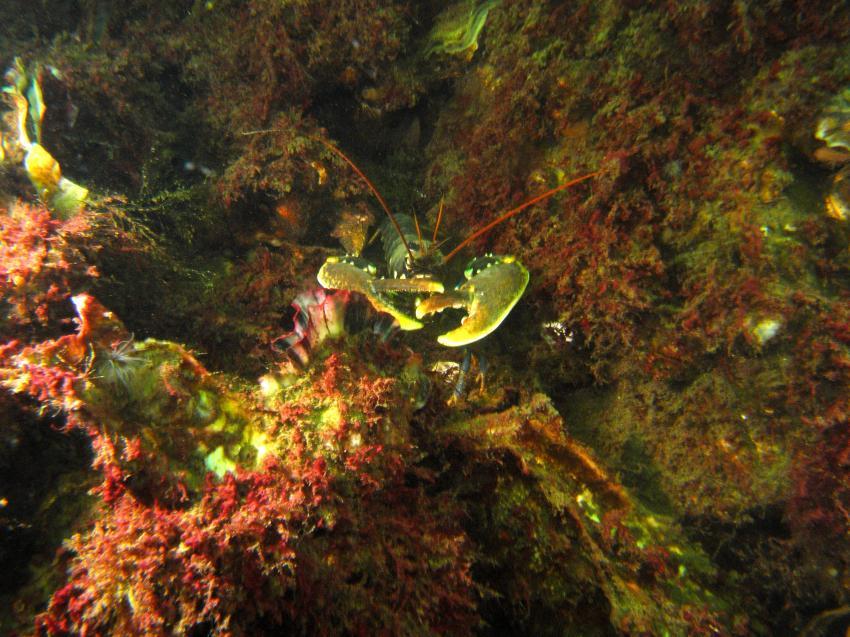 Dreischor Frans Kok Riff, Grevelinger Meer,Kunstriff Frans Kok,Niederlande