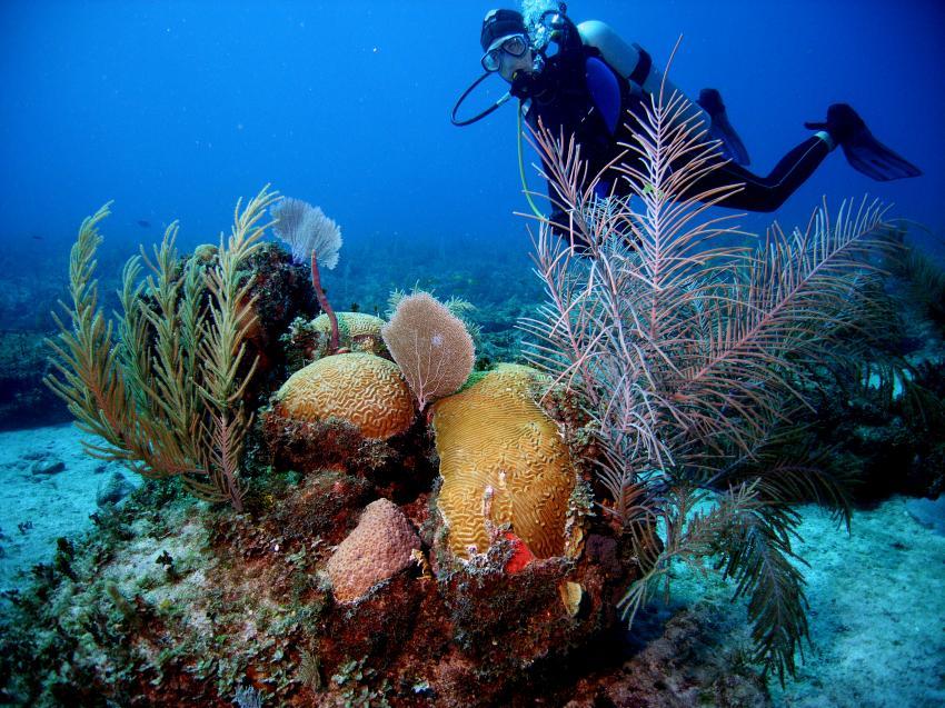 Cayo Largo, Cayo Largo,Kuba,Korallen,weich und hart,bunt