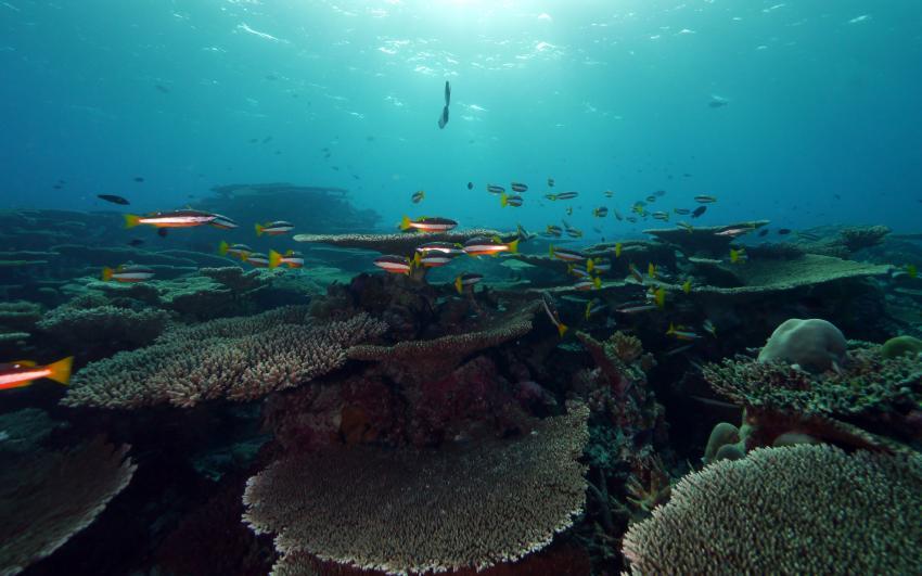 2012, MY Amba,Malediven