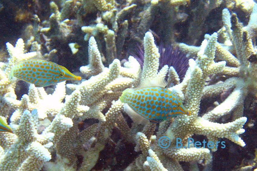 Blue Bay, Blue Bay,Mauritius