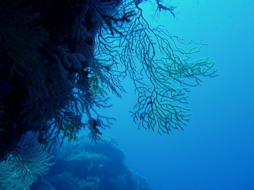 Isola del Giglio, Giglio,Italien,Isola del Giglio,korallen,überhang
