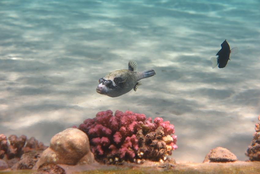 Scuba World Divers_Makadi Bay_Hausriff_5, Tauchen in der Makadi Bay, Scuba World Divers Makadi Bay, Ägypten, Hurghada