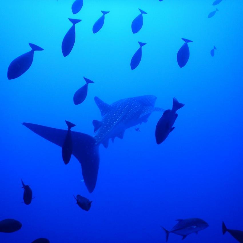 Elfinstone Reef, Marsa Adventure Divers, Ägypten, Marsa Alam und südlich