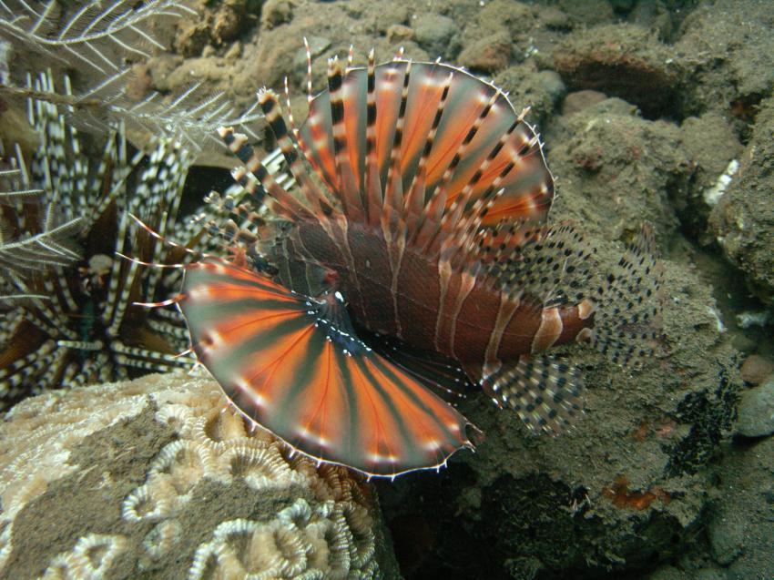 Bali Tulamben und Umgebung