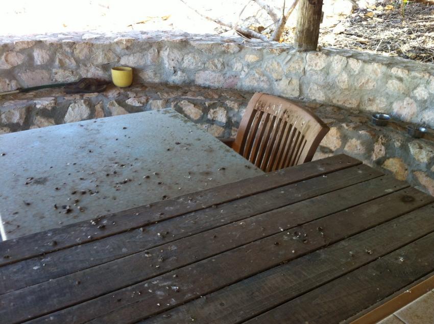 `Tisch in der Anlage, Apartments Watapana, Niederländische Antillen, Curaçao