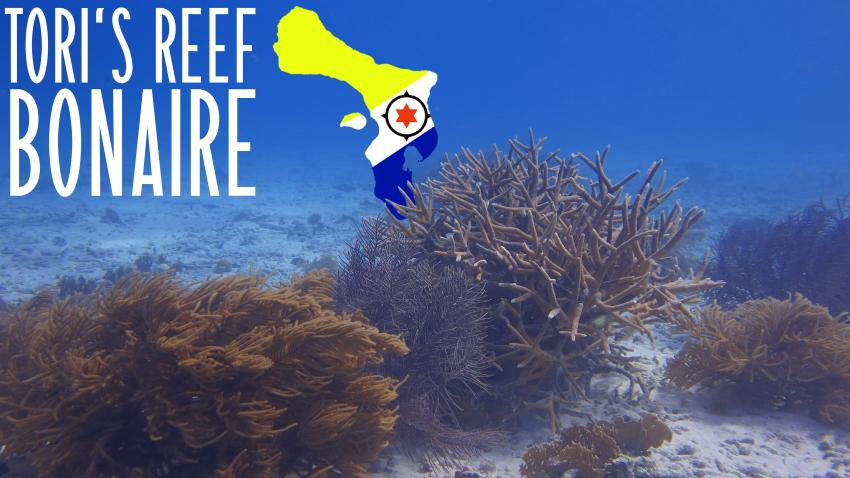 Tori's Reef, Niederländische Antillen, Bonaire