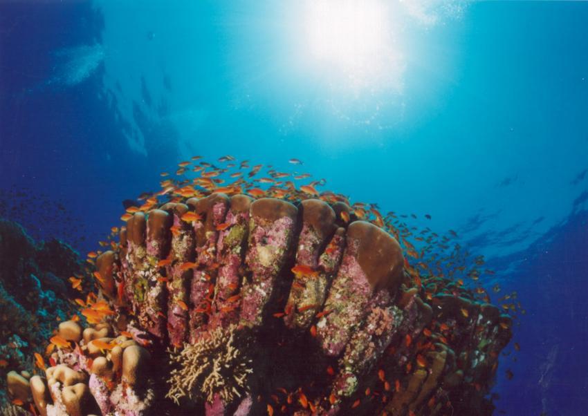 Lahami Bay