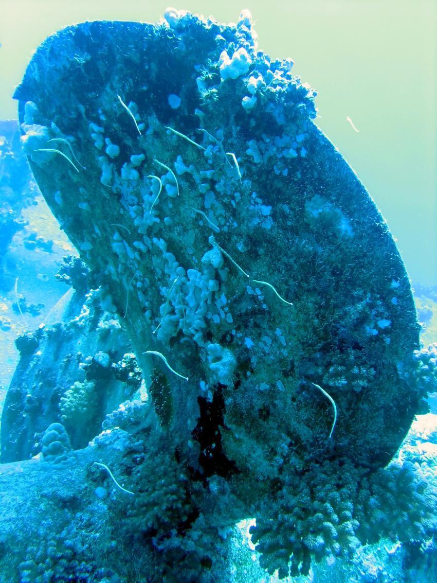 Flamenco Beach Hausriff und Umgebung, Salem Express, diving.DE El Flamenco,Riff,El Quseir,Ägypten