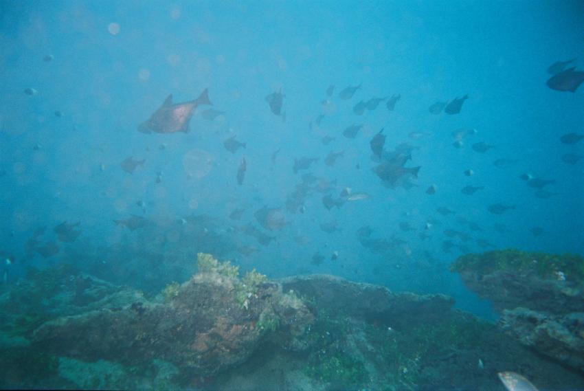 Turtle Bay - Malindi, Turtle Bay,Malindi,Kenia