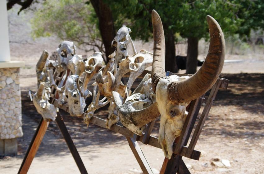 Komodo Nationalpark, Wunderpus, Indonesien, Allgemein