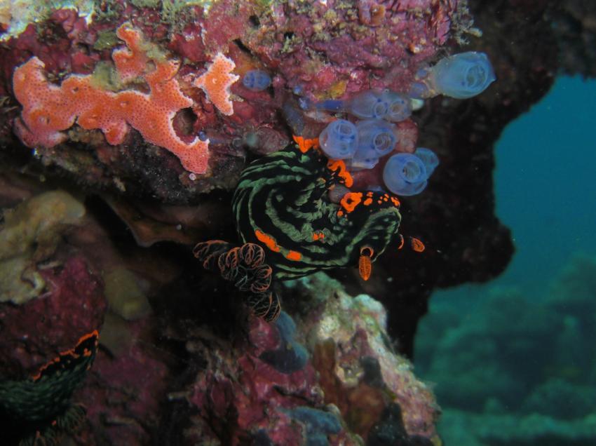 dive society, unterwasseraufnahmen, negros dauin,Philippinen