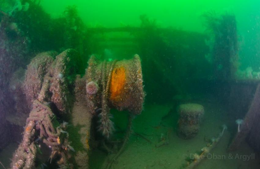 SS Breda Deck, Breda, Wracktauchen, Schottland, Basking Shark, Wrack SS Breda, Großbritannien