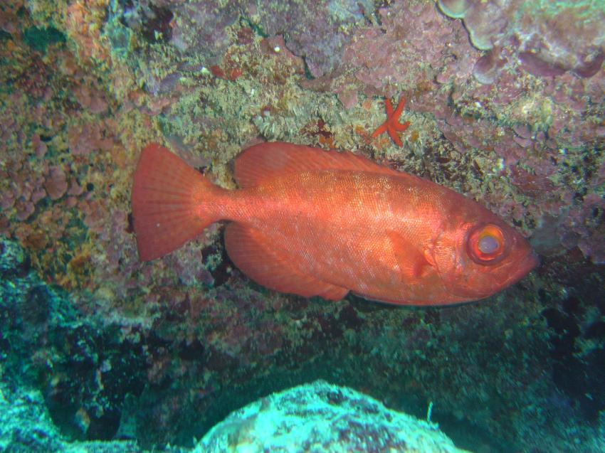 Le Morne  Easy Dive, Le Morne,Mauritius,soldatenfisch,höhle,rot,auge