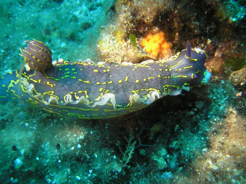 Styria-Guenis-Diving-Group, Insel Krk