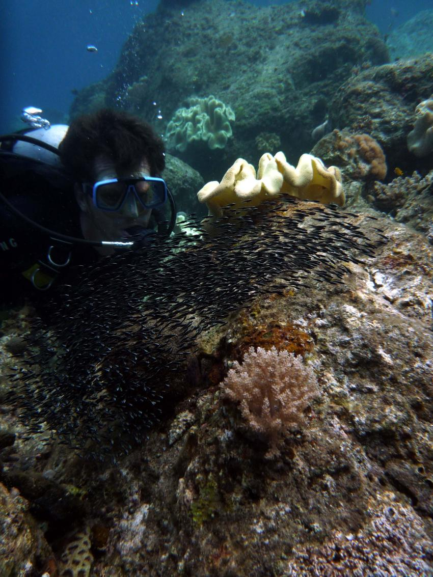 Taucher beobachtet einen Schwarm Jungfische