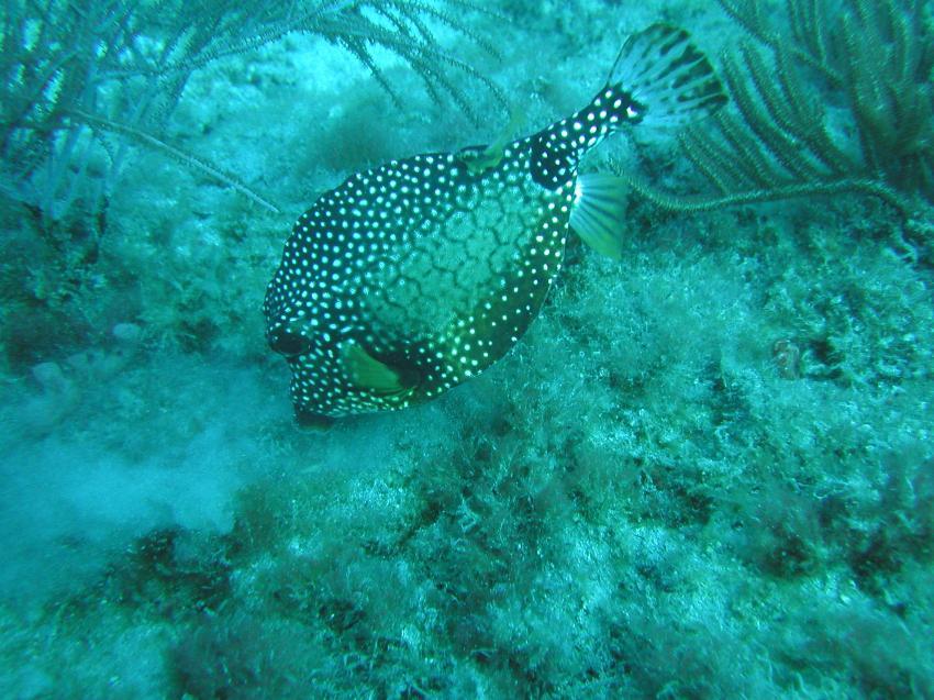 Riviera Beach - Reef ´Breakers´, Riviera Beach,FL,Florida,USA