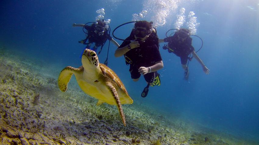 Unterwasser mit ScubaCaribe, Schildkröte, Taucher, ScubaCaribe Cancun - RIU Hotels, Mexiko