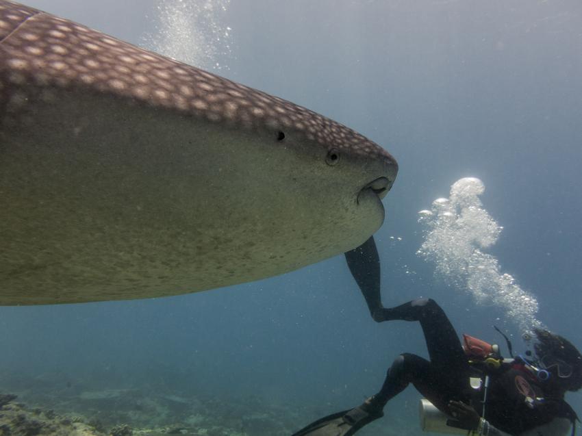 aufpassen, Carpe Novo Explorer, Malediven