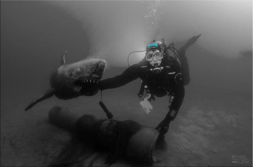 Shark Attack , Tauchsport Pazifik, Graz, Österreich