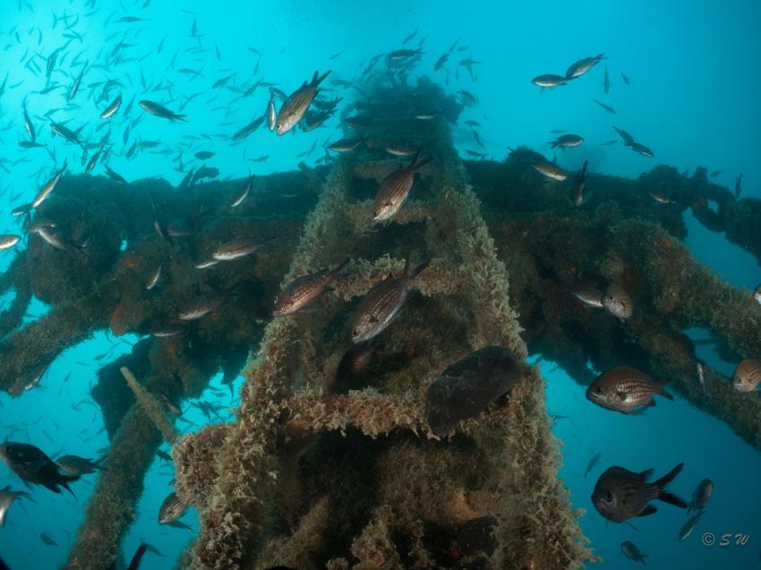 Peltastis, Peltastis.Wrack, Styria Guenis Diving Center, DIE Tauchbasis auf der Insel Krk, DIE Tauchbasis auf der Insel Krk, Styria Guenis Diving Center, Kroatien