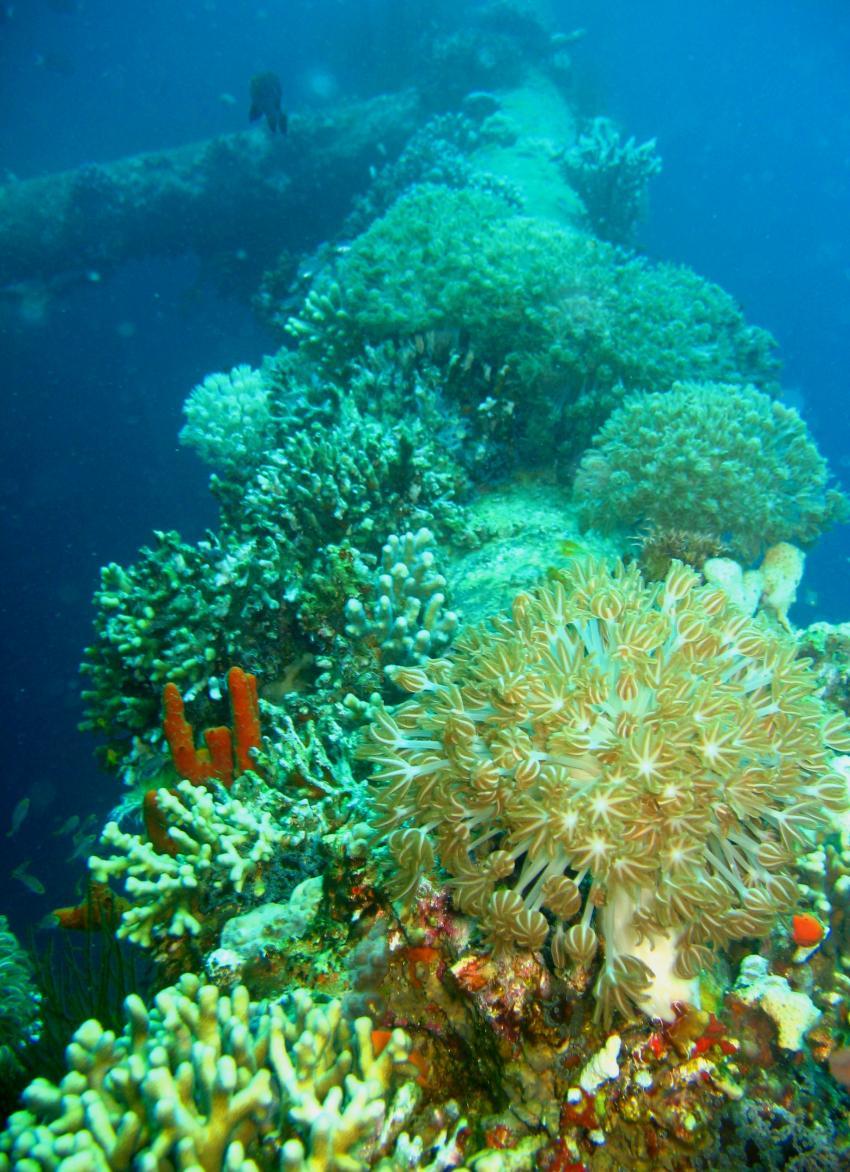 Golf von Aqaba, Golf von Aqaba,Jordanien,Korallen,Wrack,Mast,Bewuchs