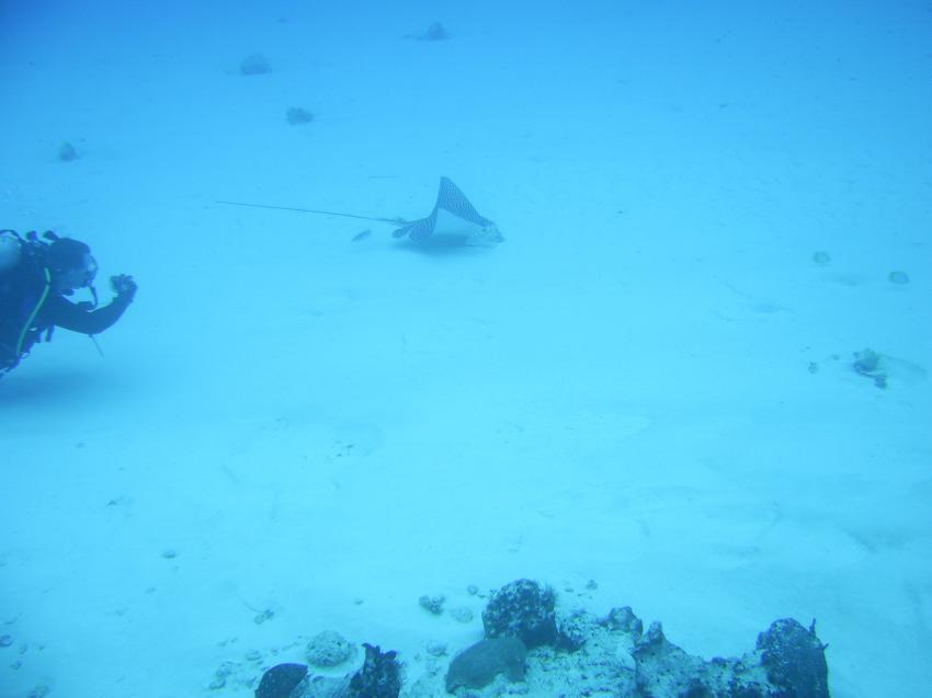 Mit Caribbean Divers in Boca Cica gesehen