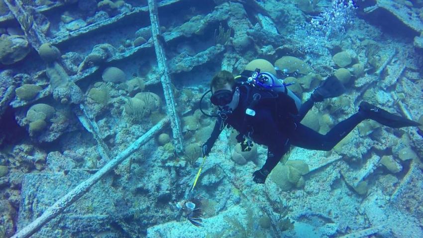 Wrack der Pollockshields, Bermuda