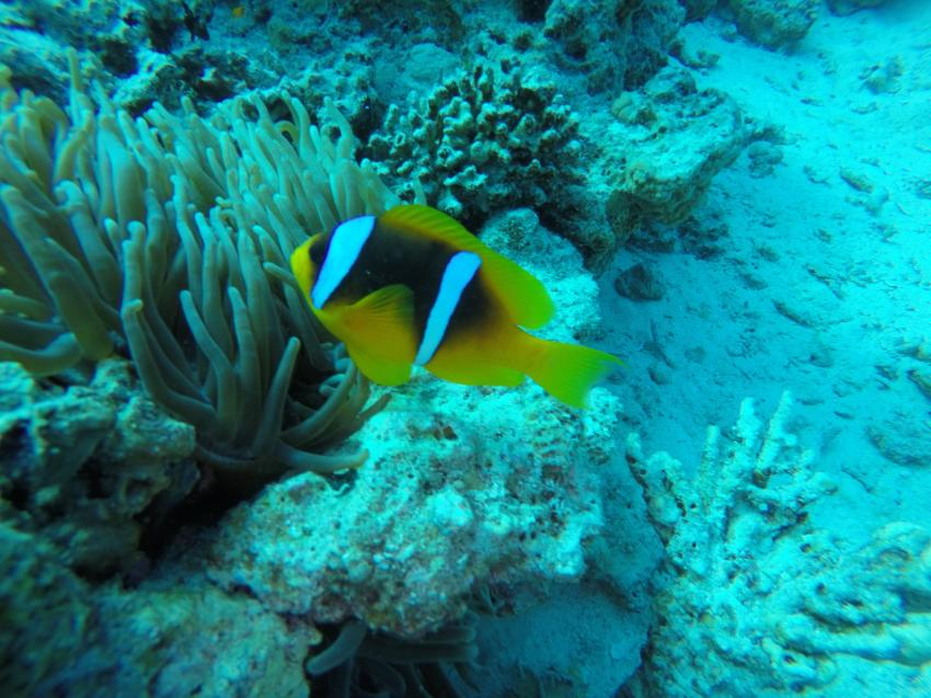 Dive In, Sunrise Holidays Resort Hurghada, Ägypten, Hurghada