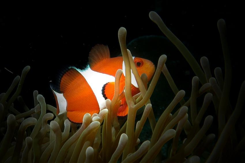 Bohol Lahoy Dive Resort, Bohol Lahoy Dive Resort,Philippinen