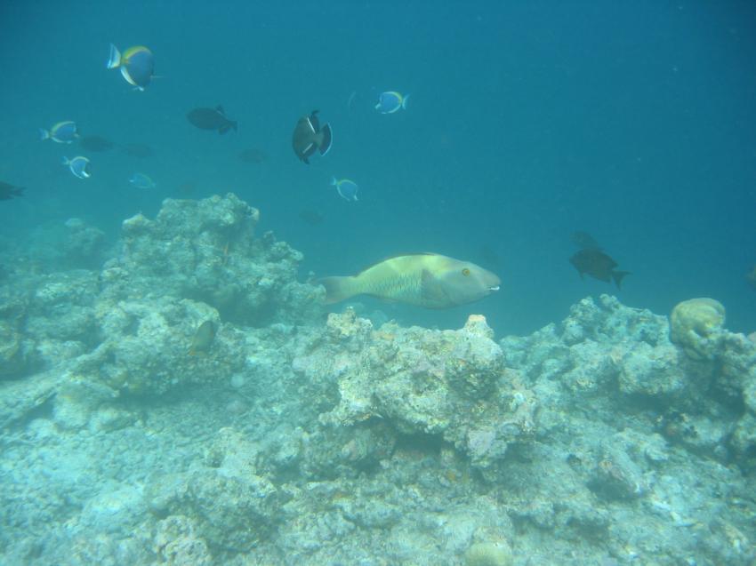Villivaru, Villivaru,Malediven