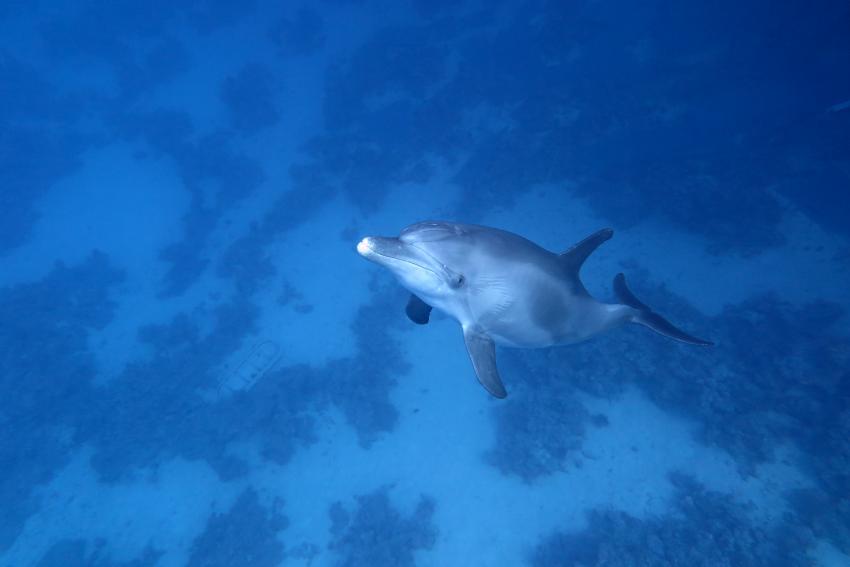 Scuba World Divers Doplhinhouse, Tauchen Ägypten Makadi Bay, Scuba World Divers Makadi Bay, Ägypten, Hurghada