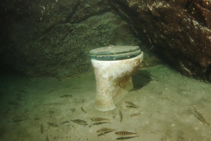 Fische im April, Attersee - Hinkelsteine,Österreich