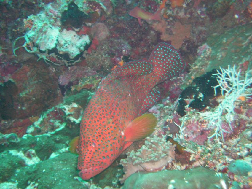 Vilu Reef, Vilu Reef,Malediven