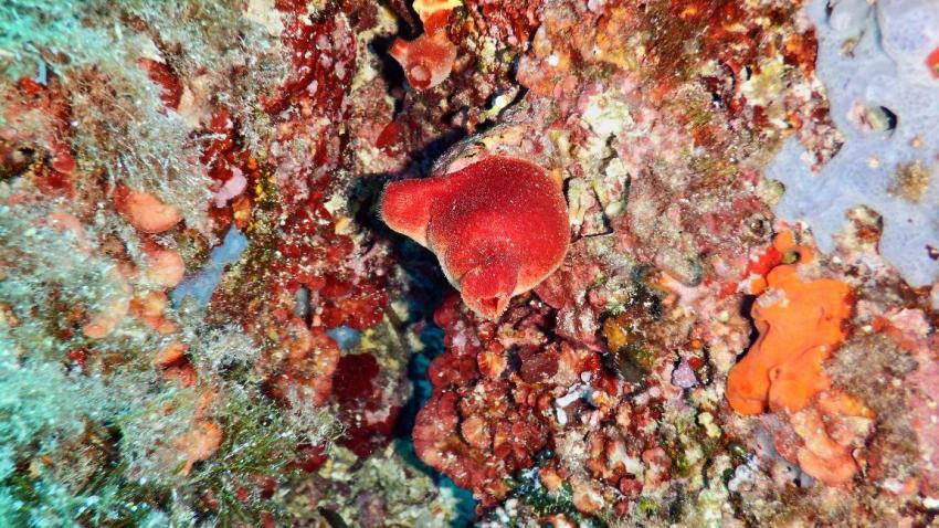Divestar International (ehemals Punta Dive), Cala Martina, Spanien, Balearen